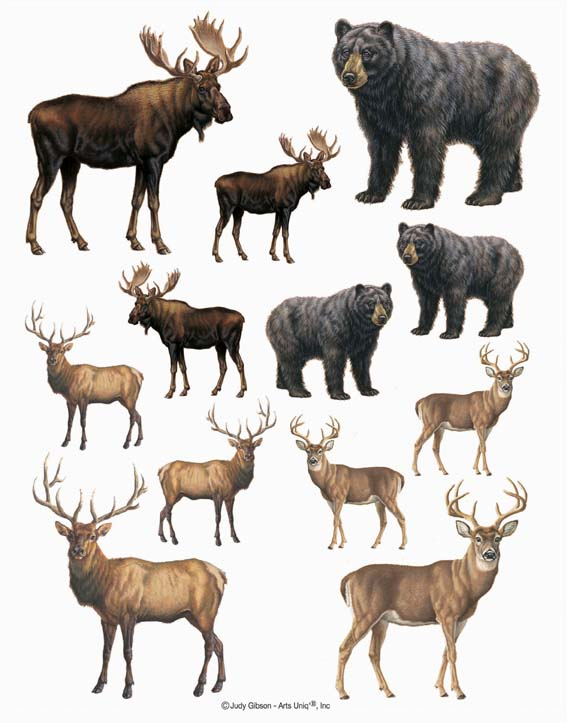 IdeaStix Wildlife 2-Sheet Accents - Original Premium Peel and Stick D??cor